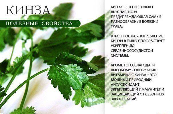 Такая полезная зелень! Сохраняем, узнаем о продуктах больше полезных свойств<br><br>Больше полезной информации смотрите здесь #полезные_продукты@talkabouthome