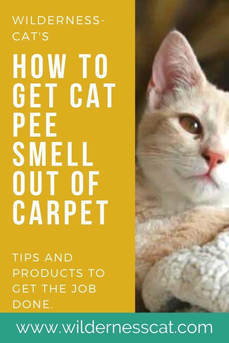Best Cat Urine Carpet Cleaner How To Get Rid Of The Cat Pee Smell In 2020 Cat Pee Smell Cat Urine Cats