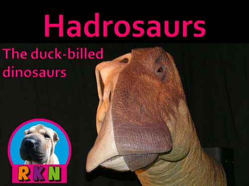 """Hadrosaurs - """"The Duck-billed Dinosaurs""""   More than just an informative PowerPoint presentation, this educational package contains a few higher level thinking activities to engage the students.  You will learn what characteristics define a hadrosaur, as well as, some members of the hadrosaur family. by Nygren Resources (The cover photo's attribution link can be found by Simone Ramella here - https://www.flickr.com/photos/ramella/2261115146"""