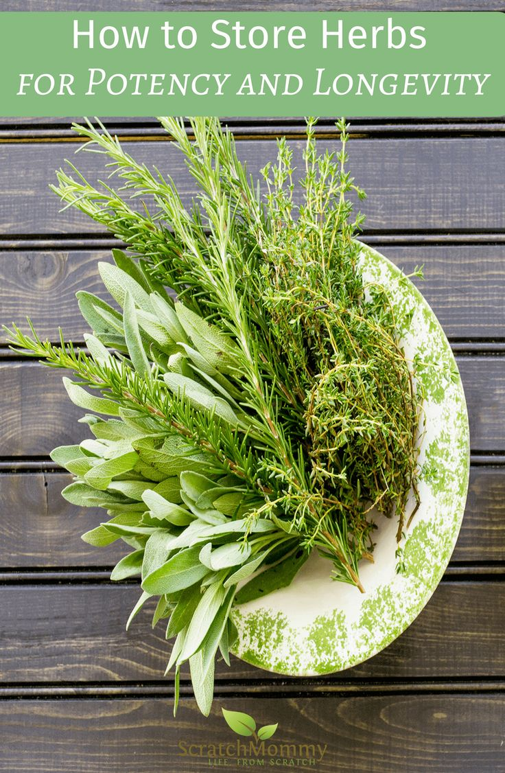 Come Learn How to Store Herbs for Potency and Longevity (fresh and already dried herbs)!- Scratch Mommy