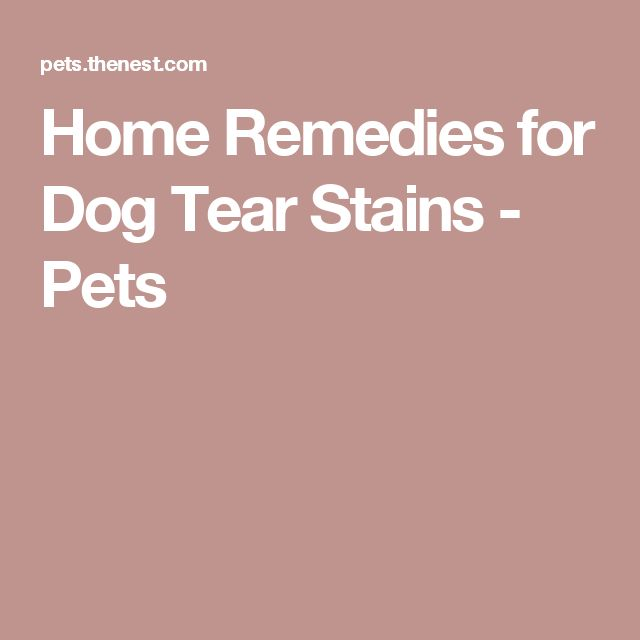Home Remedies for Dog Tear Stains - Pets