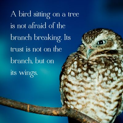 I made this! #owl #quote
