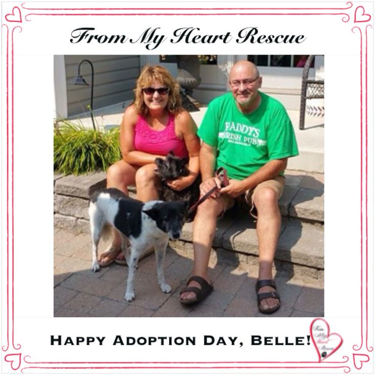 #Please ❤️+ #Pin #FMHR #FromMyHeartRescue #RescueWithoutBorders #SavingOneDogAtaTime ~ #Happy #Adoption #Day #CurlySue #aka #Belle *Many thanks to Melissa, Dana, Hilary, Cara and family, for all their fabulous volunteer work behind the scenes. ❤️ *Thank you *Info, Foster, Adoption, PayPal & e-transfer: frommyheartrescue@hotmail.com *Our Vets: Brock St. Animal Hospital/FMHR 905-430-2644 *Fundraising & Volunteering: FMHRfundraising@hotmail.com    *Find Us: FB, Twitter, IG, YouTube & Google+