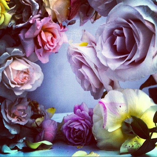 Nick Knight @showstudio_nick_knight Roses from my gar...Instagram photo   Websta (Webstagram)