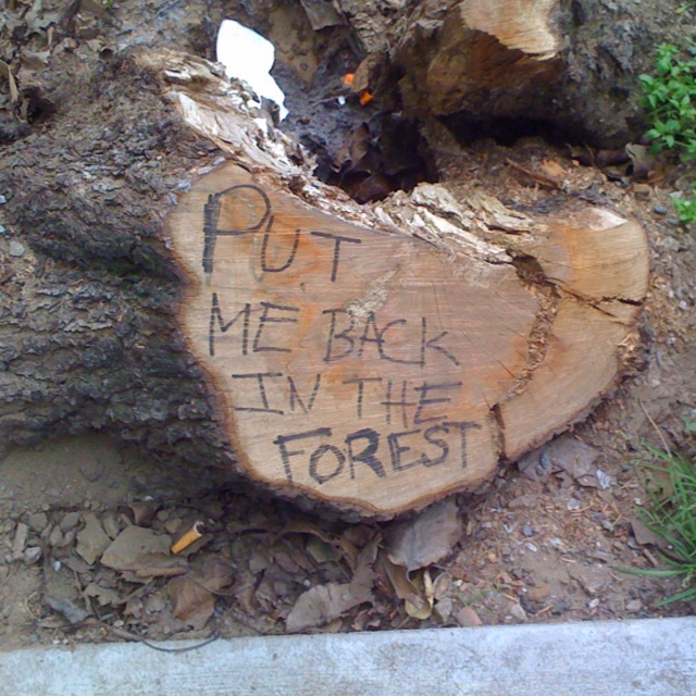 A tree stump near Haight Ashbury in San Francisco. Telling it like it is.