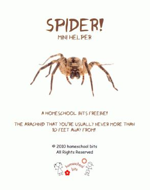 Arachnid Unit Study 105 best presch...