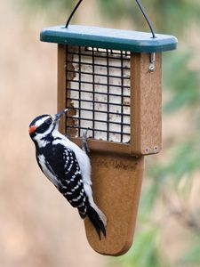 WBU EcoTough® Tail Prop Suet Feeder Picture. The tail prop really helps the birds have a comfortable station to rest and eat. It is especially helpful to the bigger woodpeckers like the Pileated Woodpecker. | Wild Birds Unlimited of Gig Harbor, WA