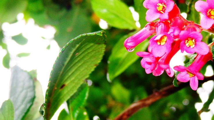 Drop of water in a flower   Flickr - Photo Sharing!