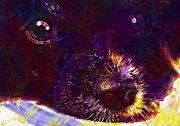 "New artwork for sale! - "" Dog Puppy Papillon Eyes Snout  by PixBreak Art "" - http://ift.tt/2vMCz2t"
