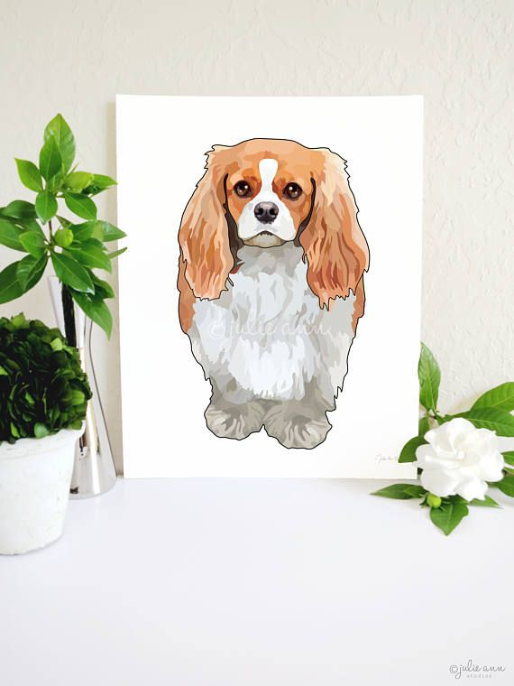 1802 best Cavalier King Charles Spaniels and King Charles Spaniels