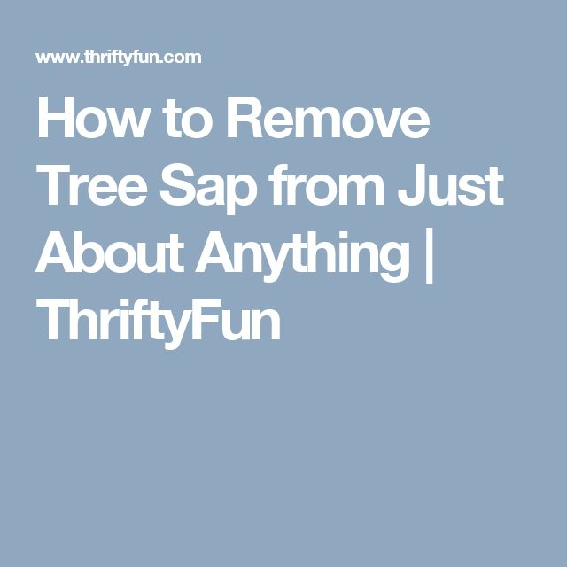 How to Remove Tree Sap from Just About Anything | ThriftyFun