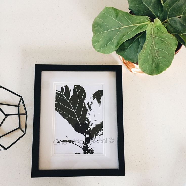 • Fiddle Leaf Fig • Digital Print    ------------------ Artwork Size 148 x 210mm A5 210 x 297mm A4 297 x 420mm A3 420 x 595mm A2  A5, A4 and A3 prints are printed on high quality 300gsm white matte paper. Anything larger than A3 (A2+) are printed on high quality 160 gsm coated paper. Print comes unframed and packaged with a great deal of care for shipping to your home.  This artwork remains © 2016 One Little Rascal by Bridgette Gale.  PLEASE NOTE: I ta...