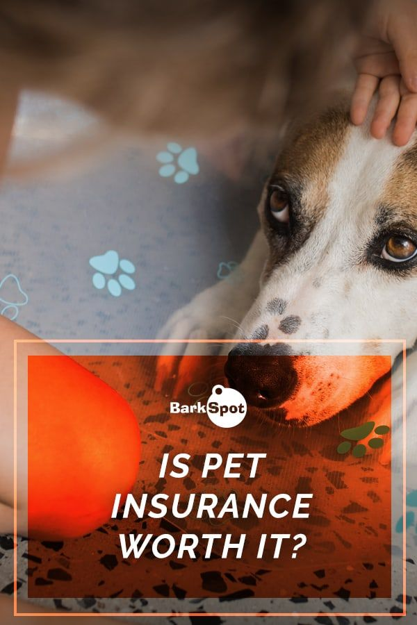 Is Pet Insurance Worth It In 2020 Pets Dog Care Checklist Pet Insurance