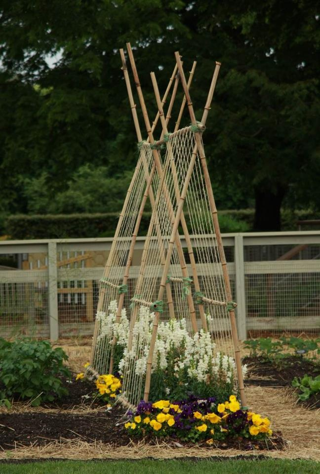 Beautiful For Bean Vines And Tomatoes Bamboo In The