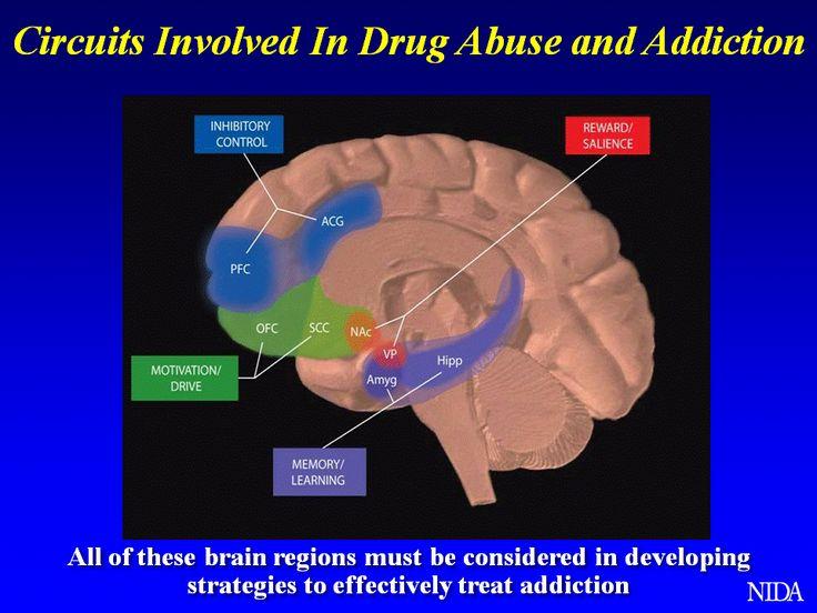 Circuits of addiction