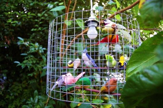Best 25 Birdcage Chandelier Ideas On Pinterest