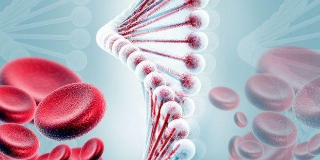 Vitamine B12 is onontbeerlijk voor de aanmaak van onze rode bloedcellen, optimale werking van het ze...