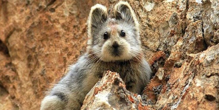 Rare 'Magic Rabbit' from China spotted for the first time in 20 years - Lost At E Minor: For creative people