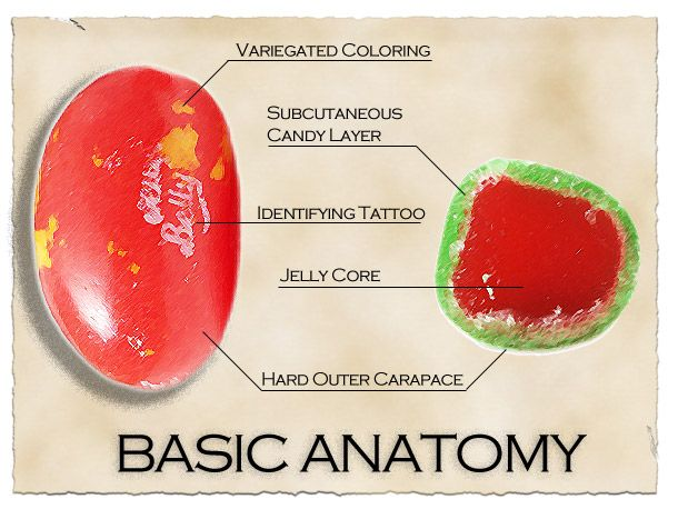Field guide to Jelly Belly identification