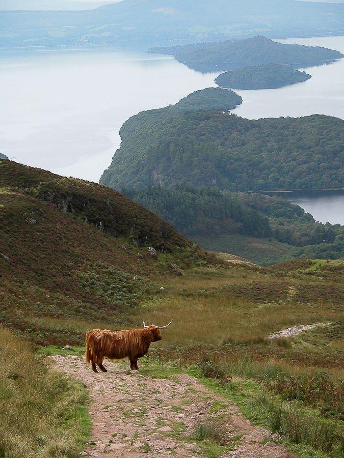 confinedlight:Conic Hill, above Loch Lomond, Balmaha, Scotland