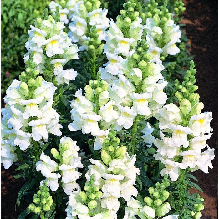 Bulk Flower Seed For Sale image by garden starts nursery