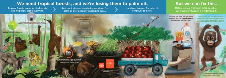 Palm oil and tropical forests...