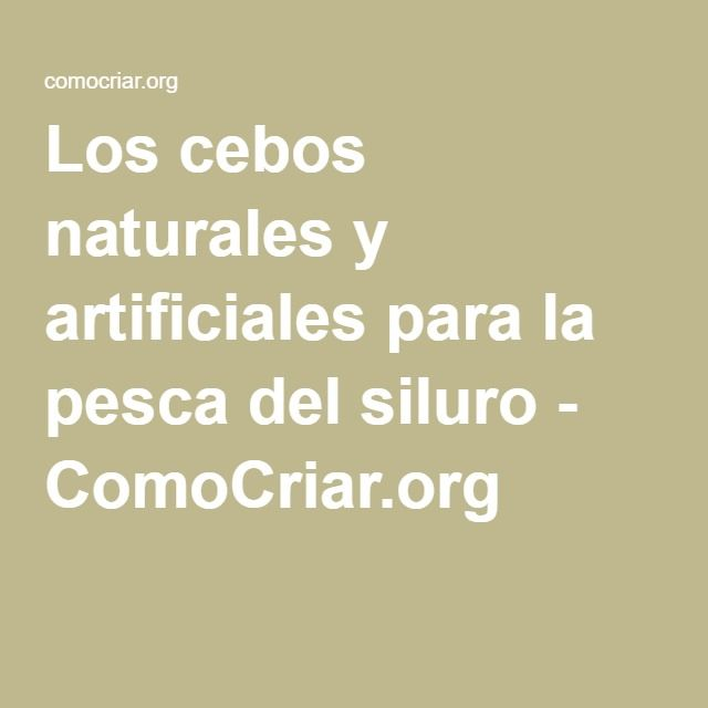 Los cebos naturales y artificiales para la pesca del siluro - ComoCriar.org