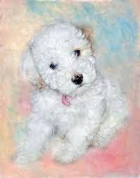 Bichon Frise dog breeds looks like cutest and sweet.