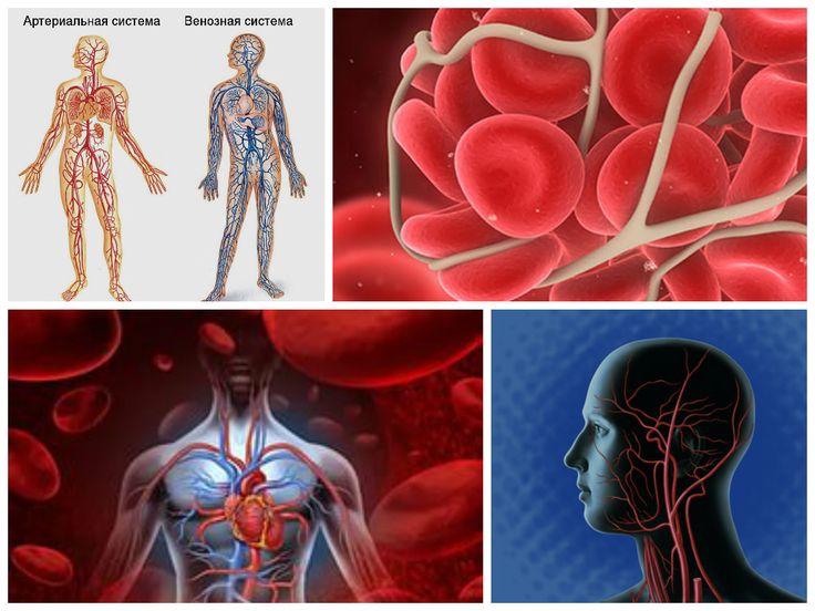 Ангиология и сосудистая хирургия изучает сосудистую систему человека. Одной из специализаций ангиологии является флебология - наука о болезнях вен.