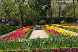 Tulipanes en Real jardin botanico Madrid. #Jjardinbotanico #Madrid