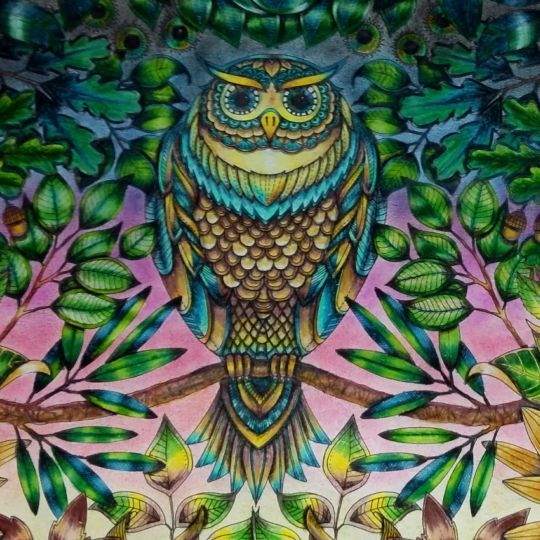 101 Best Images About Coloring Owls On Pinterest