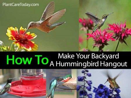 how to make your backyard a hummingbird hangout - Homemade Hummingbird Food