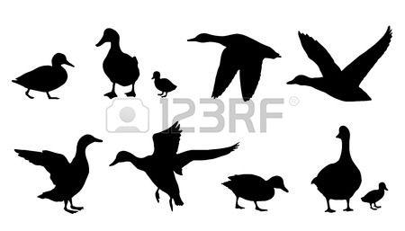 silhouettes de canard sur le fond blanc Banque d'images