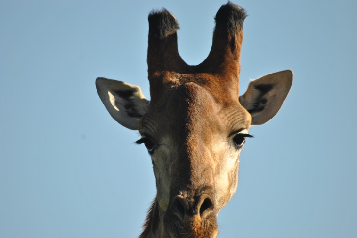 On safari with Heritage Tours and Safaris.