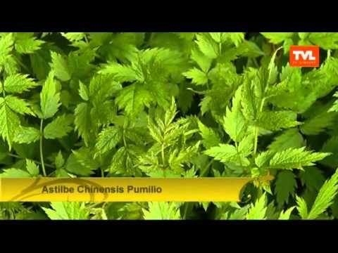 TUIN: Praktische planten in de tuin en een vijver op je terras!