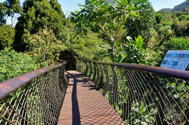 Top of the canopy, boomslang, Kirstenbosch Gardens, Cape Town, South Africa      Fun Things To Do In Cape Town This Summer Nomadic Existence