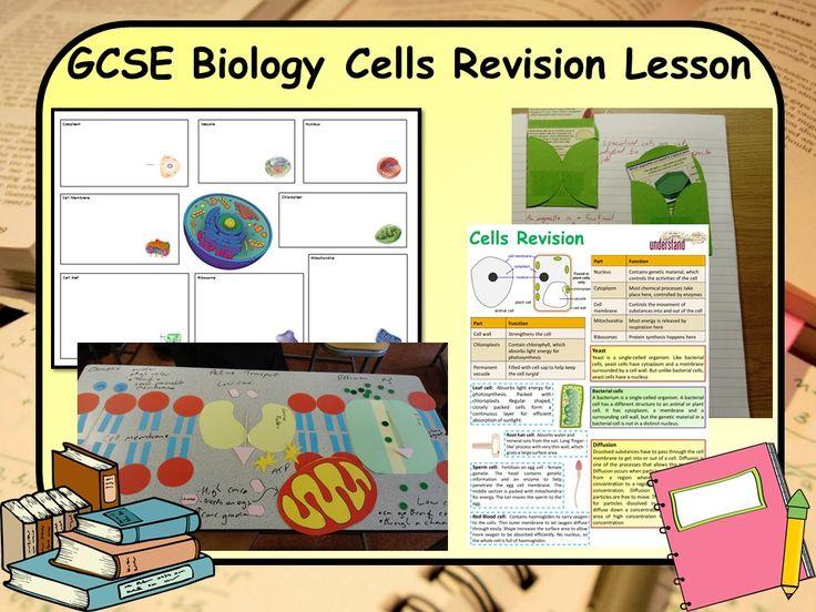 Best 25 gcse biology revision ideas on pinterest science gcse ks4 biology science cells revision lesson ccuart Gallery
