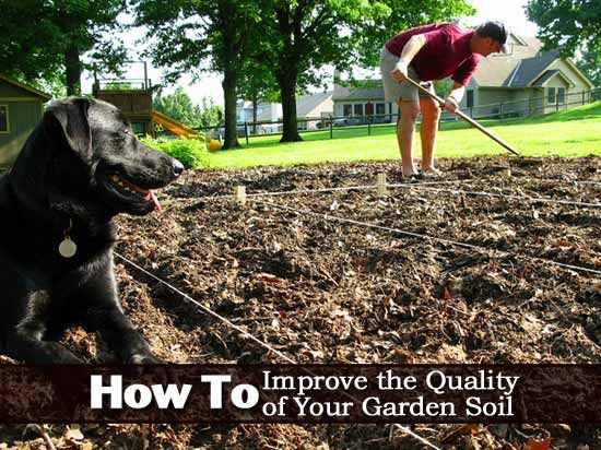 10 Best Images About All About My Soil On Pinterest Gardens It Is And How To Get