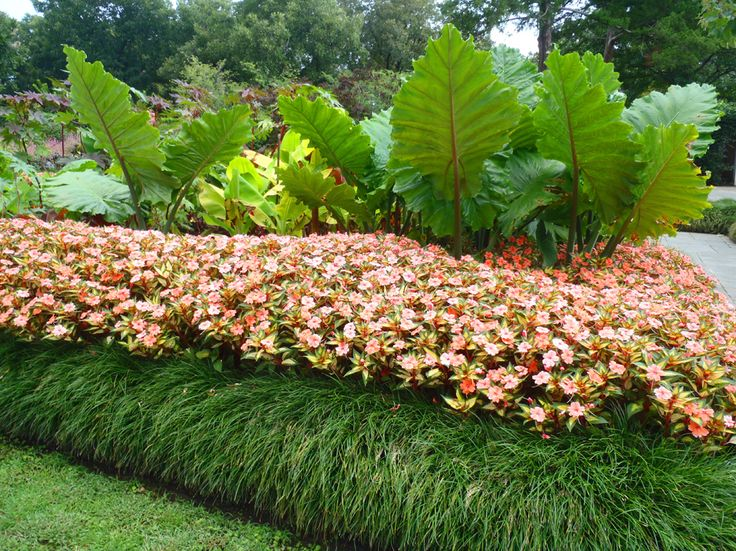 using grass like edging with the tall tropical plants in the middlein this design they have simply planted three rows of plants first row is short grass