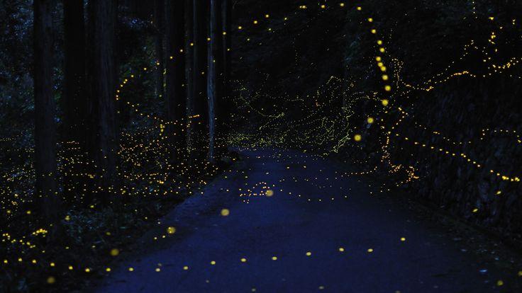 Firefly Trails - Tsuneaki Hiramatsu