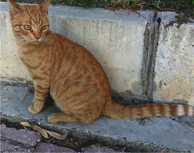Semy the cat
