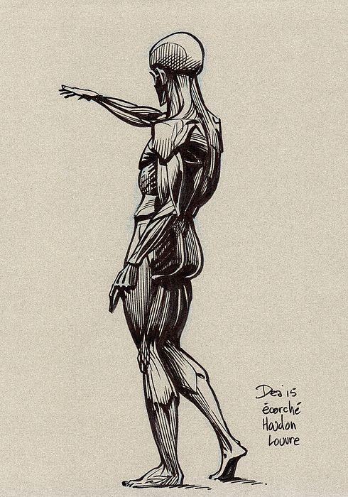 Flayed Man by Houdon in the study room at the Louvre. Drawn in one sitting in October 2015.