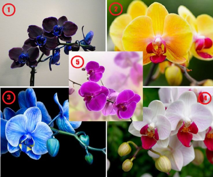 Válassz egy orchideát és ismerd meg a személyiséged legrejtettebb vonásait