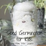 Seed Germination for Kids
