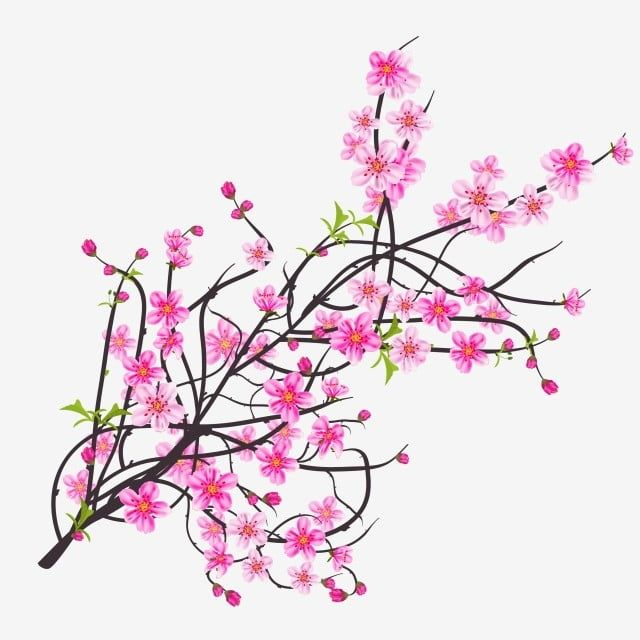Watercolor Sakura Frame Background With Blossom Cherry Tree Branches Sakura Blossom Hand Drawn Png And Vector With Transparent Background For Free Download In 2020 Flower Drawing Cherry Blossom Cherry Blossom Flowers