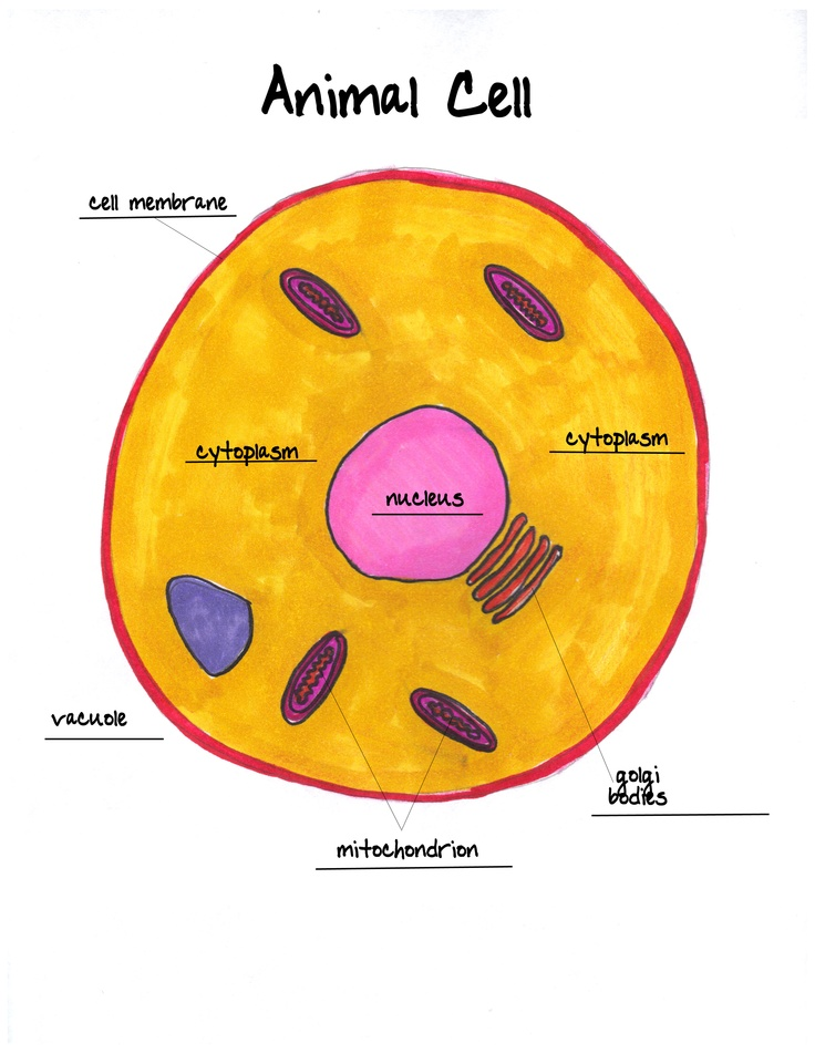 Animal Cell Coloring Page Answers : 41 best animal and plant cell science projects ! images on pinterest