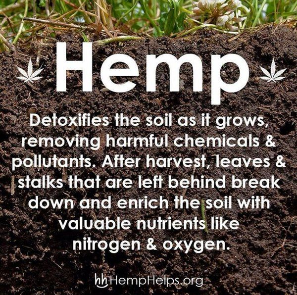 Hemp detoxifies the soil as it grows, removing harmful chemicals & pollutants. After harvest, leaves & stalks that are left behind break down & enrich the soil with valuable nutrients like nitrogen & oxygen.
