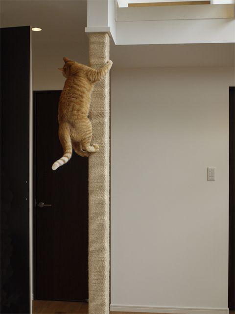 猫ちゃんと一緒に遊ぶ暮らす家 - 施工事例:【まきび住建】安心の新築・リフォーム・注文住宅を提供する岡山市の工務店です