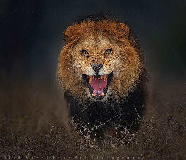Nature photographer Atif Saeed barely made it to safety after snapping this fierce photo.