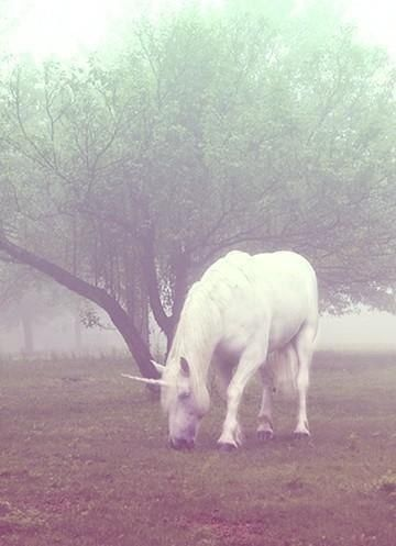 Unicorn in the early morning mist...